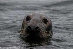 SealsB_33