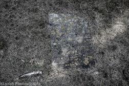 Cemetery_Chatham_Black_White_12