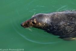 Seals_63