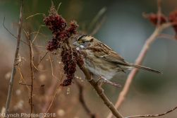 Sparrow_14