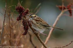 Sparrow_15