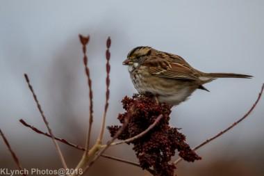 Sparrow_23