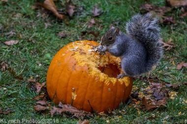 Squirrels_10