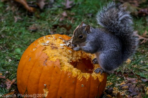 Squirrels_11
