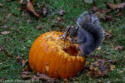 Squirrels_12