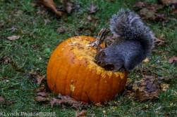 Squirrels_13
