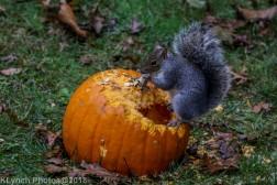 Squirrels_14