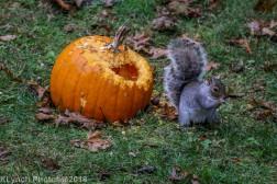 Squirrels_15