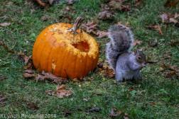 Squirrels_15