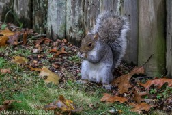 Squirrels_16