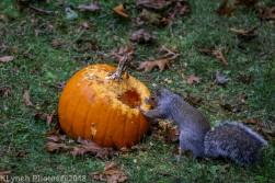 Squirrels_17
