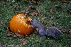 Squirrels_18