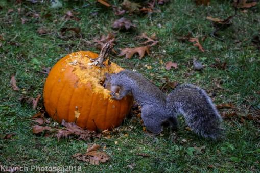 Squirrels_19