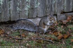 Squirrels_2