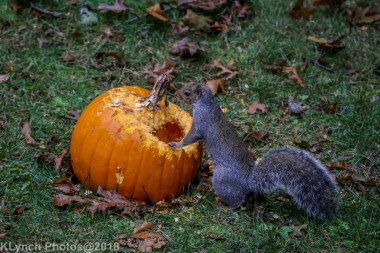 Squirrels_20