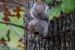 Squirrels_23
