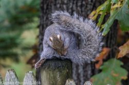 Squirrels_24