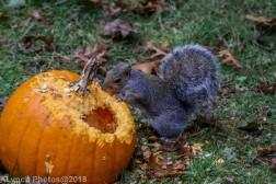 Squirrels_25