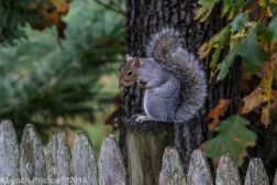 Squirrels_26