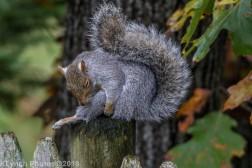Squirrels_27