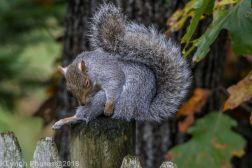 Squirrels_27