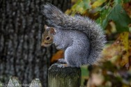 Squirrels_29