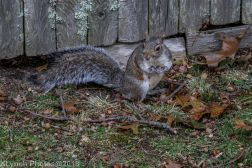 Squirrels_3