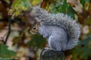 Squirrels_30
