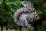 Squirrels_31