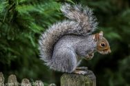 Squirrels_31