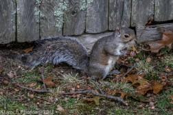 Squirrels_4