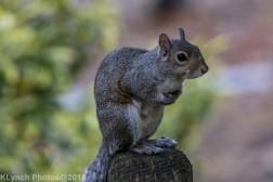 Squirrels_5