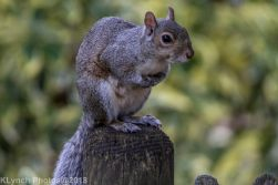 Squirrels_6