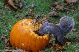 Squirrels_7