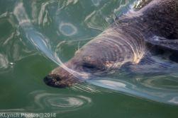 Seals_3