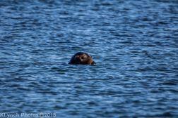 Seals_8