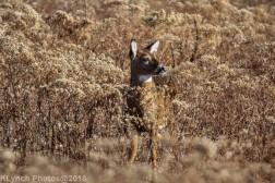 Deer_22