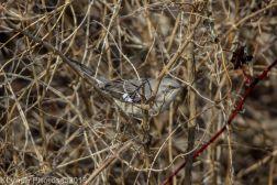 Mockingbird_10