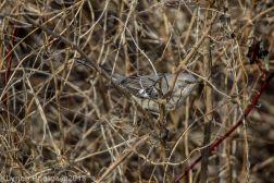Mockingbird_11