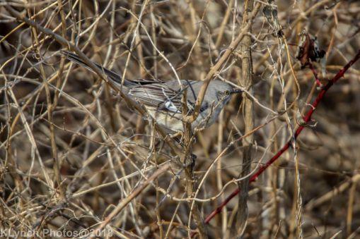 Mockingbird_8
