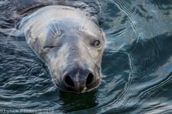 Seals_28