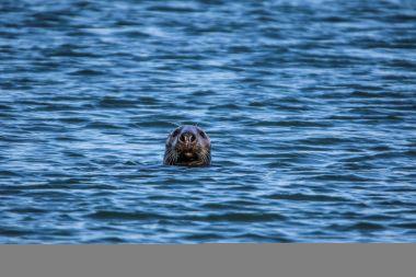 Seals_30