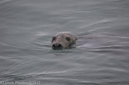 seals_5