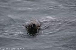 seals_66