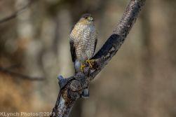 Hawk_48