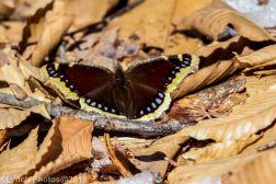 Butterfly_11