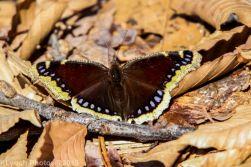 Butterfly_16