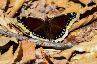 Butterfly_21