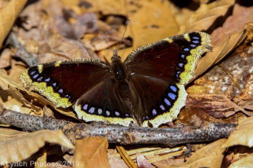 Butterfly_23