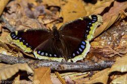 Butterfly_24